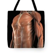 Muscles Of The Upper Body Tote Bag