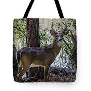 8 Point Buck In My Backyard Tote Bag