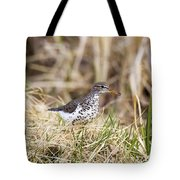 Spotted Sandpiper Tote Bag