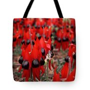 Sturt's Desert Pea Outback South Australia Tote Bag