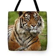 Tigre De Sumatra Panthera Tigris Tote Bag