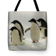 Adelie Penguins Tote Bag