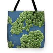 Anthrax Bacteria Sem Tote Bag by Science Source