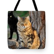 Cats In Hydra Island Tote Bag