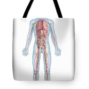 Internal Anatomy Pre-adolescent Tote Bag