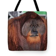 Portrait Of A Large Male Orangutan Tote Bag