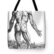 Vesalius: Muscles, 1543 Tote Bag