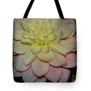 #928 D809 Dahlia Pink White Yellow Dahlia Thoughts Of You Tote Bag