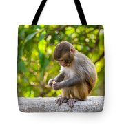 A Baby Macaque Eating An Orange Tote Bag
