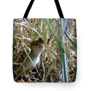 A Baby Quail Looks Back Tote Bag