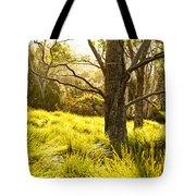 A Bare Tree Tote Bag