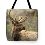 A Beautiful Young Rack Tote Bag