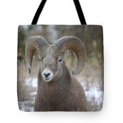 A Big Big Horn  Ram  Tote Bag