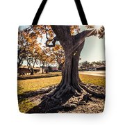 A Big  Tree Trunk Of Long Beach In The Autumn Tote Bag
