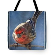 A Blue Morning Housefinch Tote Bag