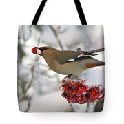 A Bohemian Waxwing Feeding On Mountain Tote Bag
