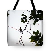 A Brown Thrasher Sings In Sycamore Tree Tote Bag