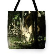 A Buck Deer Grazes Tote Bag