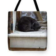 A Circled Up Cat  Tote Bag by Lainie Wrightson