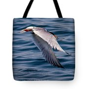 A Common Tern Tote Bag