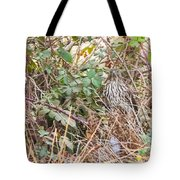 A Coopers Hawk Hidding Tote Bag