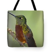A Coronet Without A Coronet.. Tote Bag