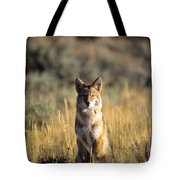 A Coyote Canis Latrans Stares Tote Bag
