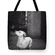 A Dog On The Roof In New York City Tote Bag by Carol Whaley Addassi