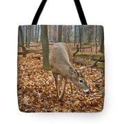 A Eight Point Buck 1261 Tote Bag
