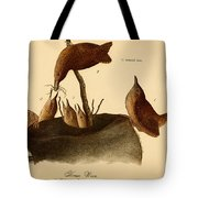 A Family Of House Wrens Tote Bag