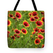a field of Indian Blankets Tote Bag