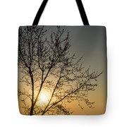 A Filigree Of Branches Framing The Sunrise Tote Bag