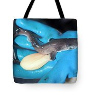 A Fisherman Holds A Dogfish Pup Tote Bag