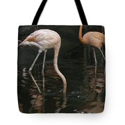 A Flamingo With Its Head Under Water In The Jurong Bird Park Tote Bag