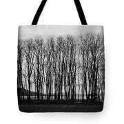 A Forest Of Trees Tote Bag