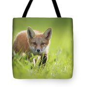 A Fox In The Grass  Montreal, Quebec Tote Bag