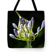 A Glow On Agapanthus Tote Bag