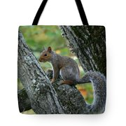 A Gray Squirrel Pose  Tote Bag