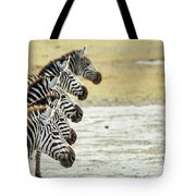 A Grevys Zebra In Ngorongoro Crater Tote Bag