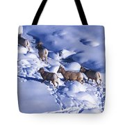 A Group Of Bighorn Sheep Ovis Tote Bag