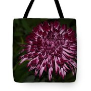 A Happy Birthday Wish With An Elegant Maroon And Pink Mum Tote Bag