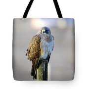 A Hawk On A Fence Post  Tote Bag