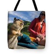 A Hiker Makes Friends With The Local Tote Bag