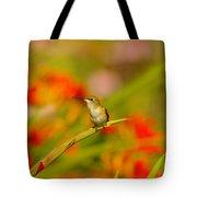 A Humming Bird Perched Tote Bag