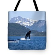 A Humpback Whale Calf Breaches As Its Tote Bag