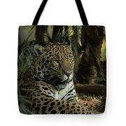 A Jaguar's Gaze Tote Bag