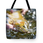 A Large Cutthroat Being Released Tote Bag