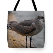 A Laughing Gull Tote Bag