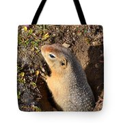 A Little Resident Of Denali Tote Bag