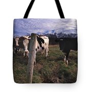 A Lot Of Bulls Tote Bag by Skip Willits